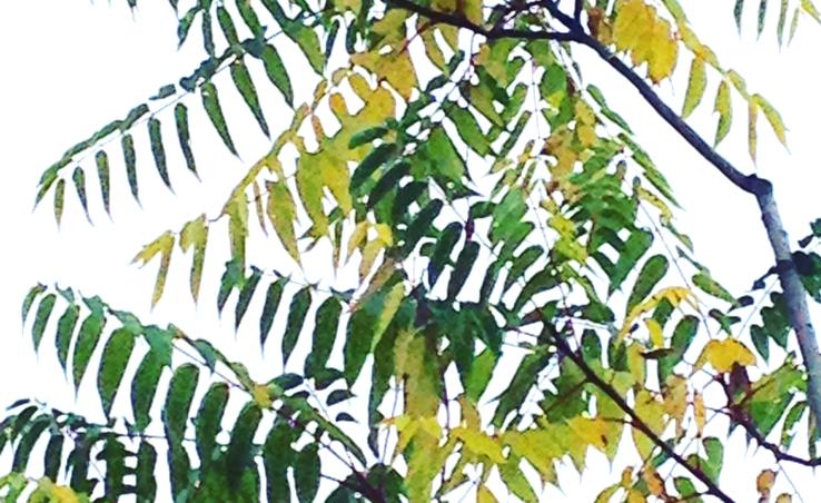 pantone-farbe-des-jahres-2017_greenery_2